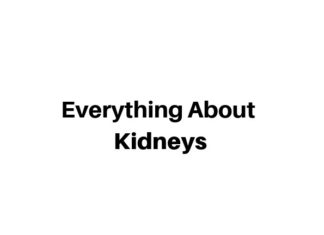 Everything About Kidneys