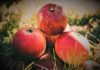 Nutritional And Scientific Facts About Apples