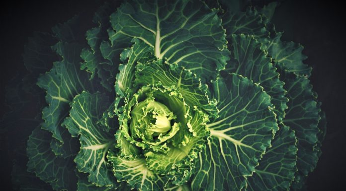 Nutritional And Scientific Facts Kale