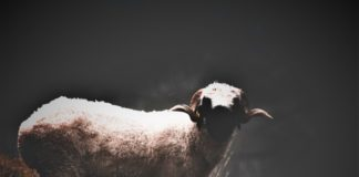 Nutritional And Scientific Facts Goats Milk