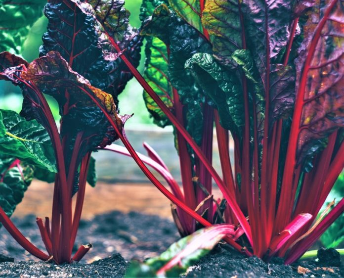Scientific Nutritional Facts Rhubarb