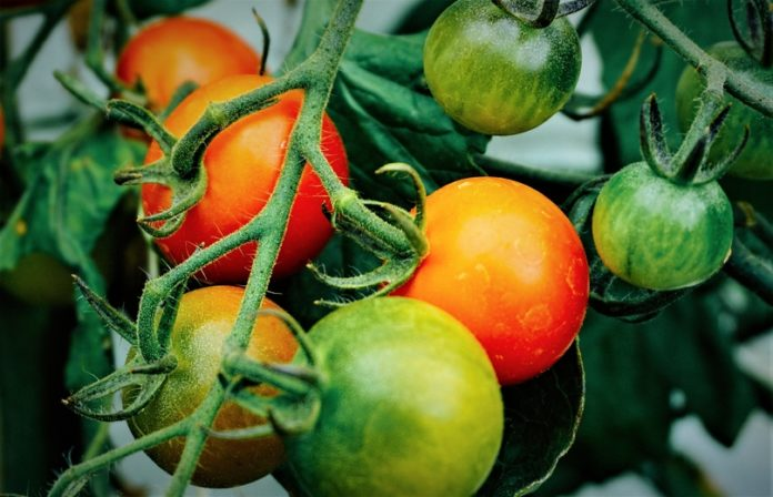 Scientific Nutritional Health Facts Tomatoes